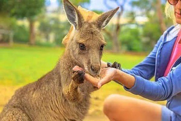 Lady+Kangaroo 2